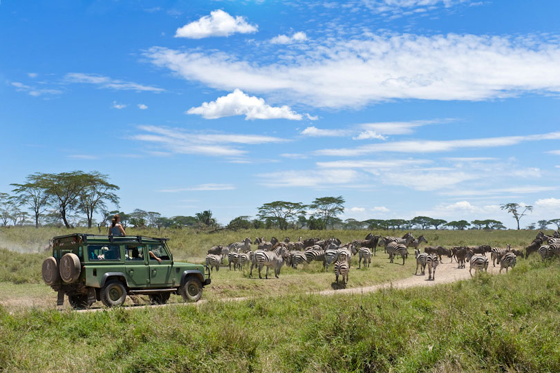Luxury safari travelers watching Zebra migration, Serengeti, Tanzania